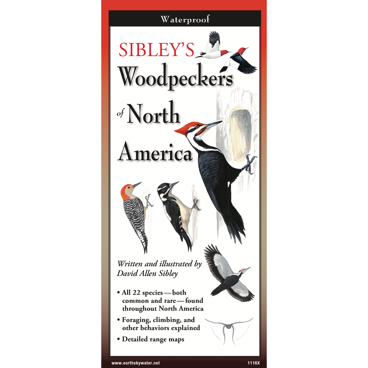 Sibley's Woodpeckers of North America