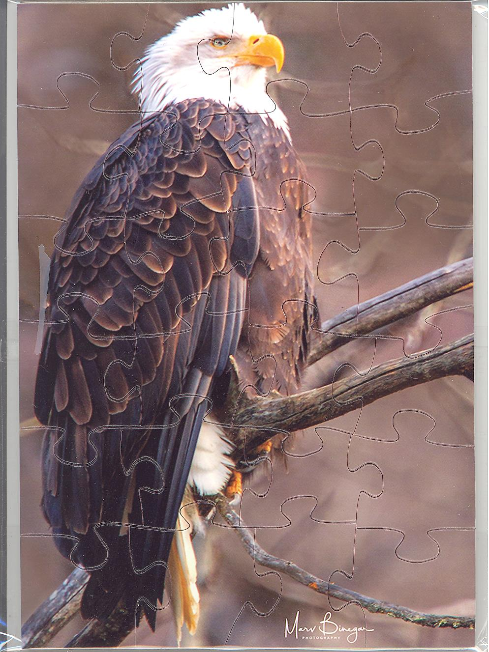 American Bald Eagle Puzzle Postcard by art photographer Marv Binegar