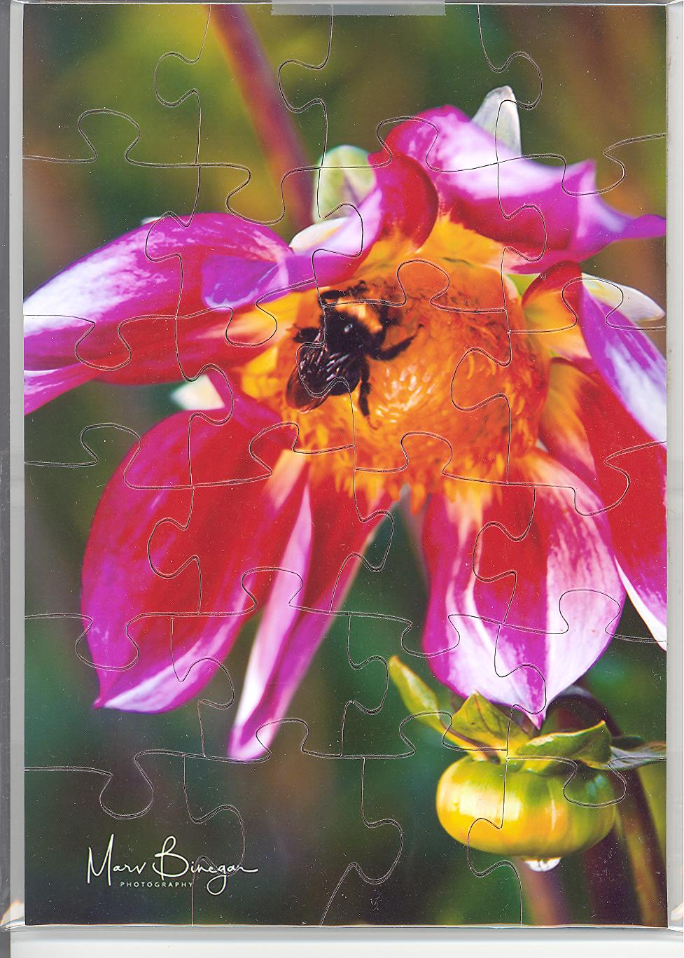 Puzzle Postcard Fort Vancouver Bumble Bee & Dahlia by Marv Binegar