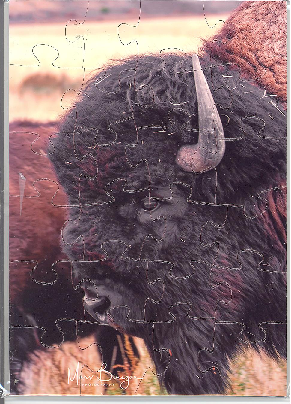 Puzzle Postcard American Bison Buffalo Yellowstone by Marv Binegar